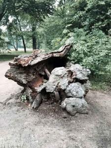 Baumstumpf_gebrochen_mod