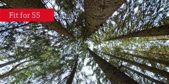 fitfo55 Baumkronen Klimaschutz Emissionshandel